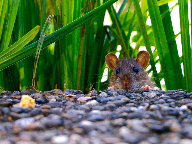 What Can You Do To Keep The Pests Away From Your Home